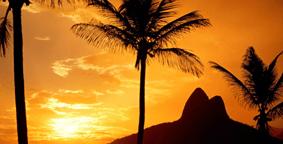 Fly Drive Brazilië Palmbomen